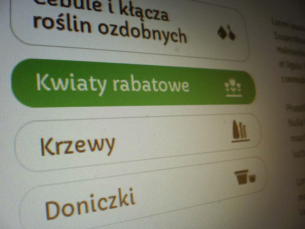 Strona www projekt graficzny